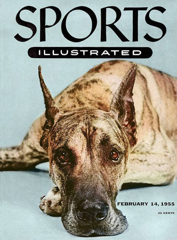 Great Dane, Autopilot, Westminster Kennel Club Dog Show, Sports Illustrated