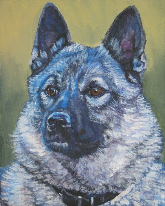 Norwegian Elkhound, title, conformation, dogs