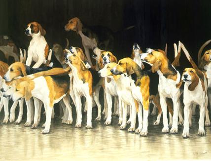 Test,hound, hunt,Beagle, Harrier,Foxhound, dog