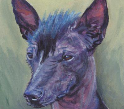 Peruvian Inca Orchid Dog,POI,purebred dog,dog,hairless,coat