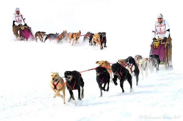 Iditarod,Iditarod,Alaskan Husky,Siberian Husky,Coastal Eskimo Dog,Malamute,Siberian Husky,German Shorthaired Pointer,Saluki,Anatolian shepherds