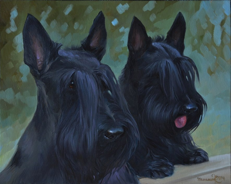 The Scottish Terrier, Diehard, Aberdeen Terrier