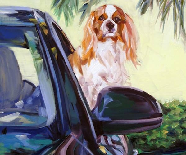 Cavalier King Charles,coat,feathering,dog,purebred dog