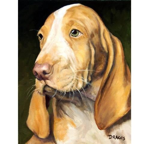 Bracco Italiano, dog, purebred dog, Italian