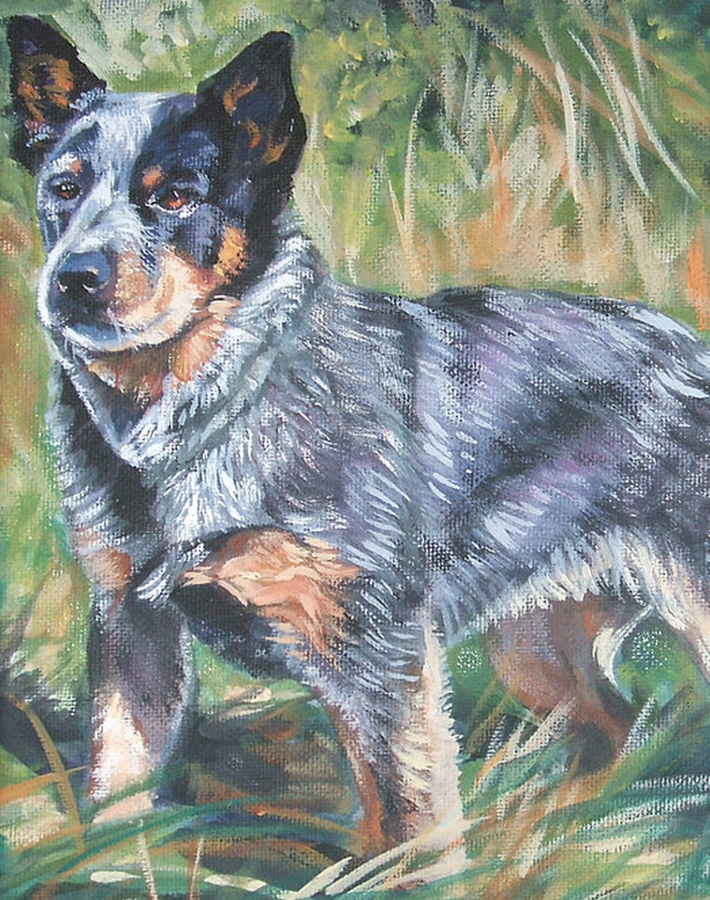 Australian Cattle Dog, heeler, history, dogs, purebred dogs