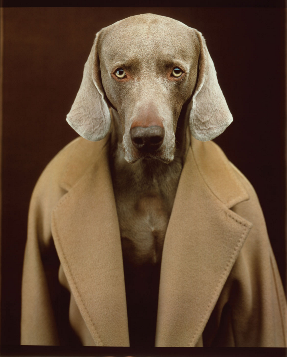 William Wegman,Weimaraner, Max Mara