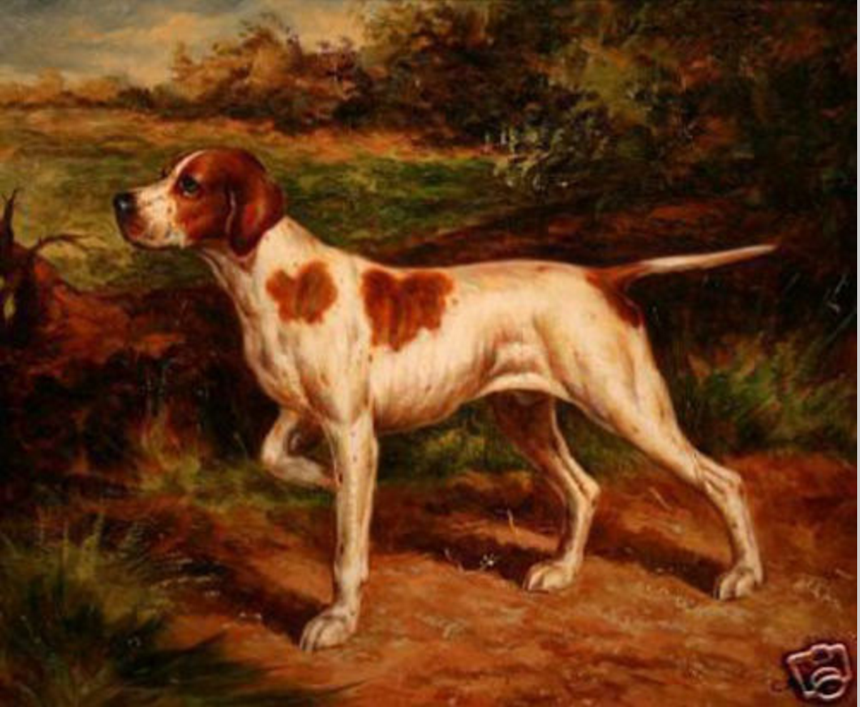 Pointer, bee sting tail, tail, dogs, purebred dogs