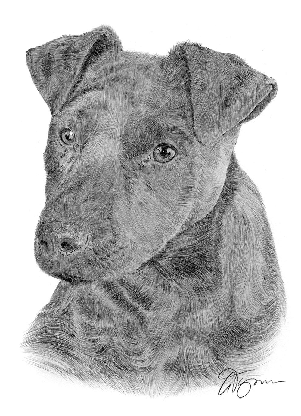 Patterdale Terrier, dog, purebred dog, terrier