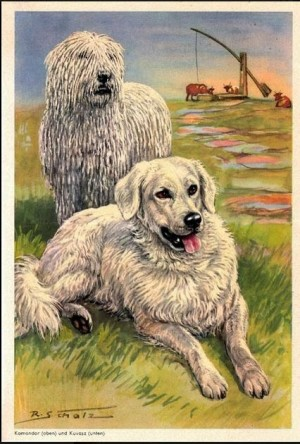Kuvasz, Komondor, Livestock Guardian Dog, Dog, purebred dog