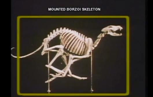 structure, borzoi
