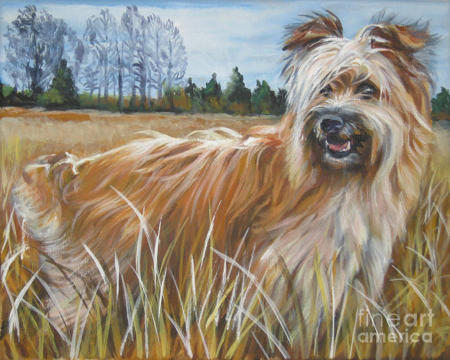 Pyrenean Shepherd, dog, purebred dog