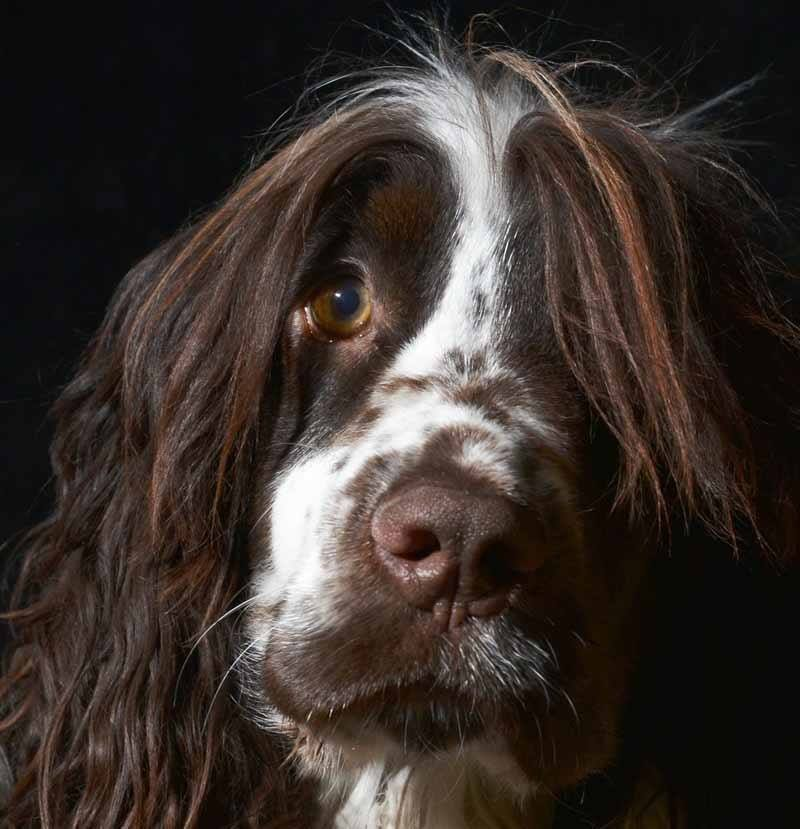 dog, contest, photography