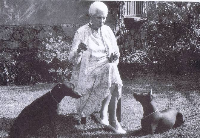 Xoloitzcuintlis, Xolo, dog, purebred dog
