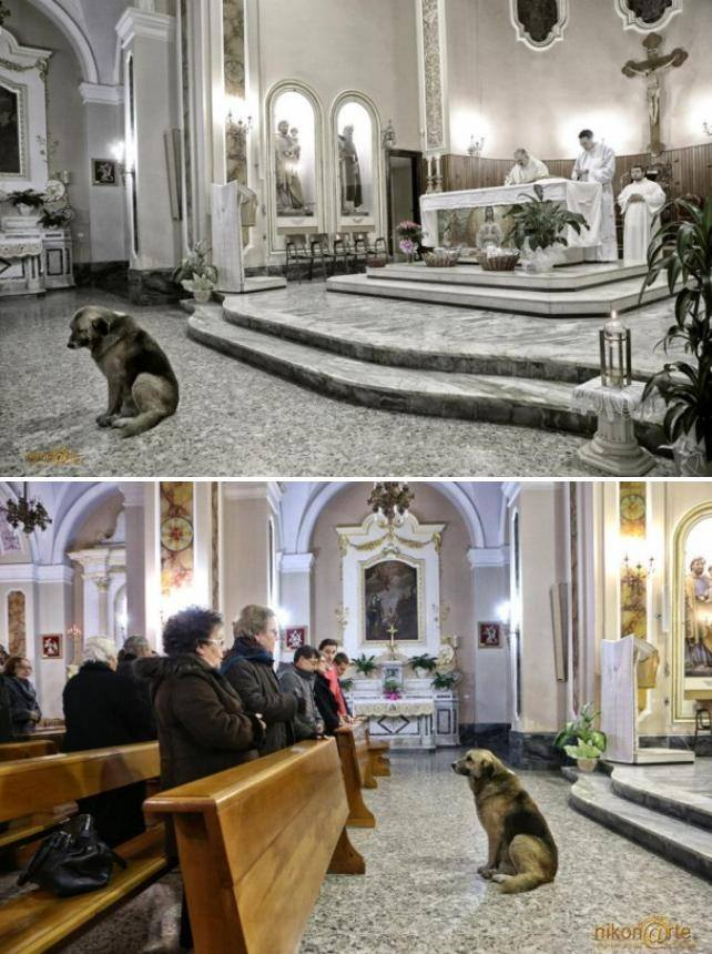 dogs, church,