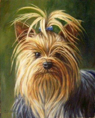 Yorkshire Terrier, Dog, dogs, Purebred dogs, hair, grooming