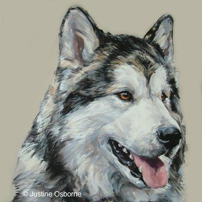 Alaskan Malamute, dogs, purebred dogs
