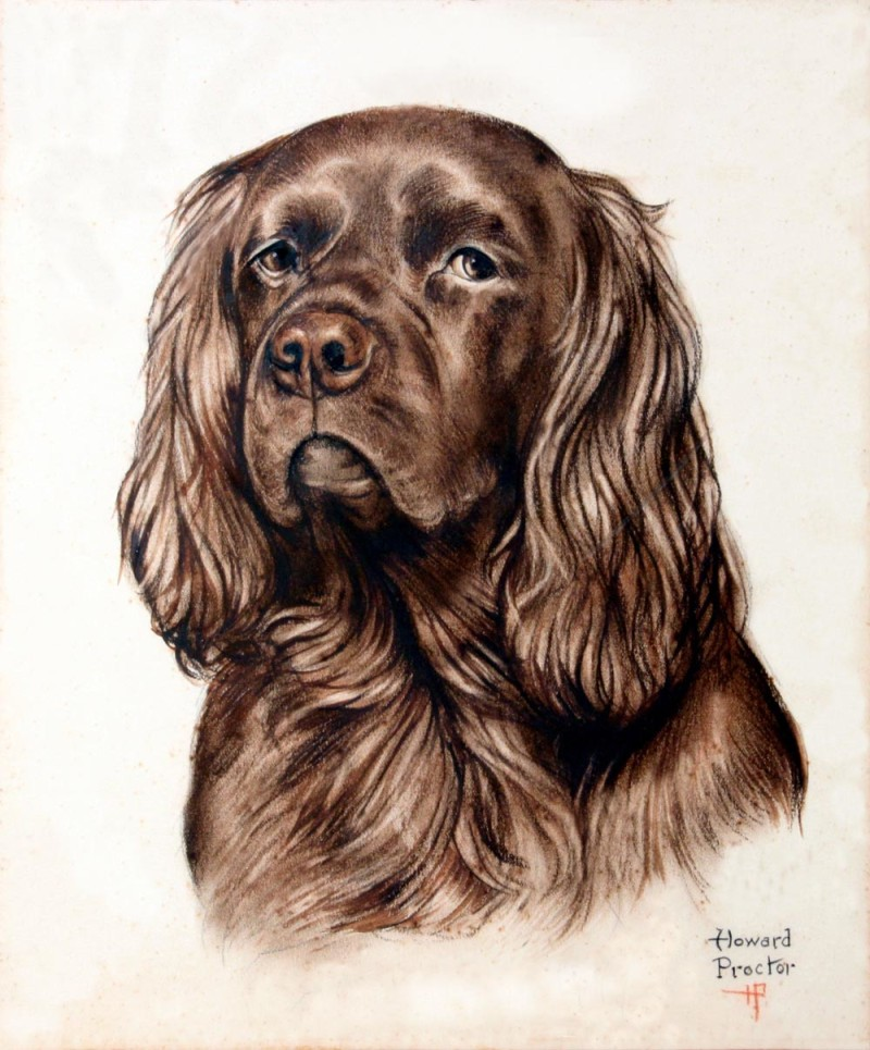 Sussex spaniel, dog, purebred dog