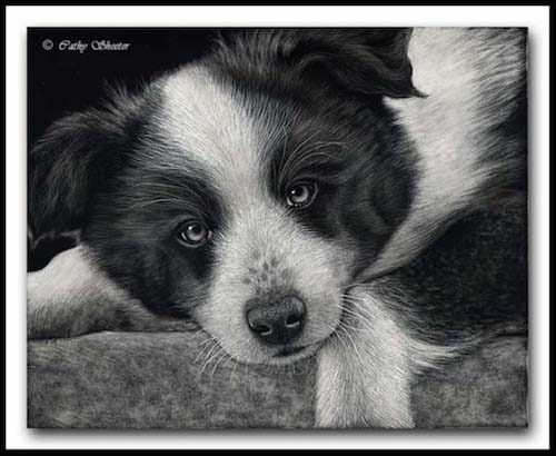 Border Collie, sheepdog, dogs, purebred dog