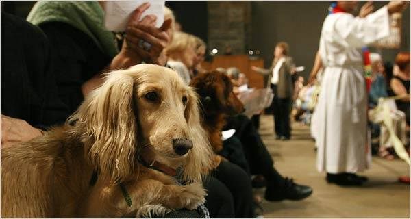 Dachshund, Blessing of the Animals, church