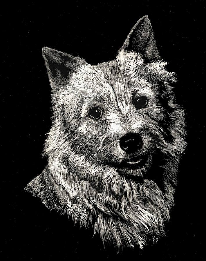 dogs, purebred dogs, norwich terrier