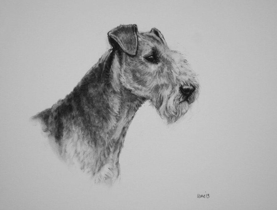 dogs, purebred dogs, old english terrier, terrier