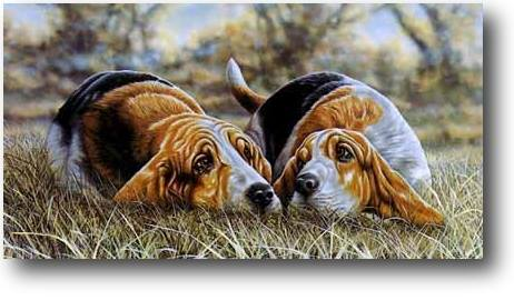Fox hunt, beagles, basset hounds, foxhounds, hounds, dogs, purebred dogs