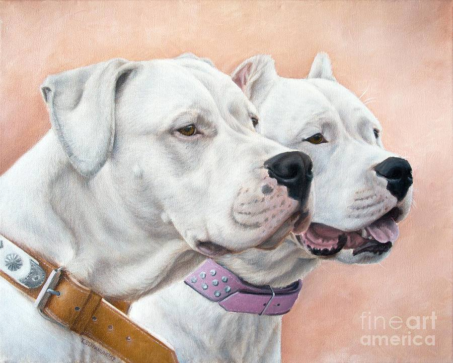 Dogo Argentino, dogs, purebred dogs