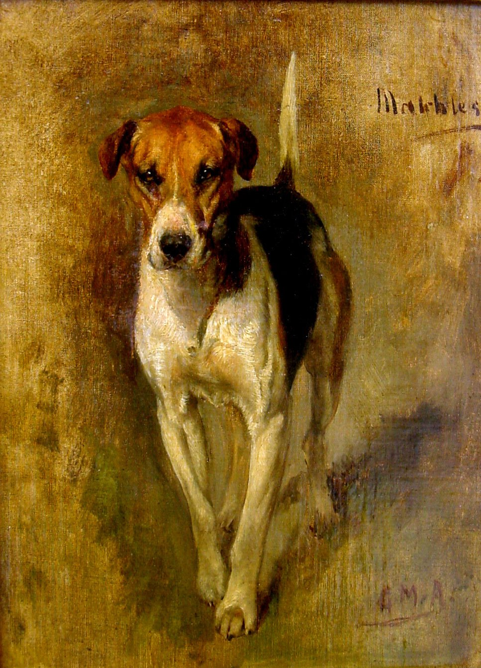 dogs, purebred dogs, Harrier, English Foxhound,American Foxhound