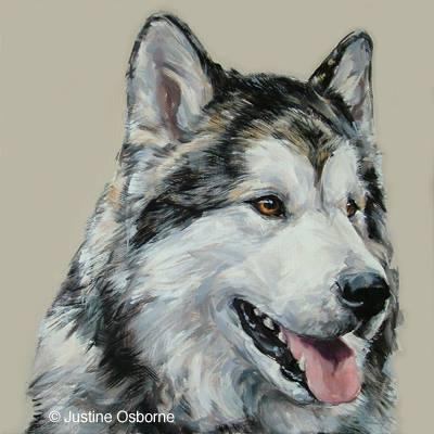 Alaskan Malamute. dogs, purebred dogs