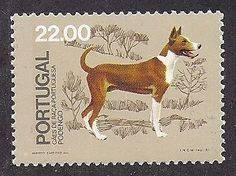 portuguese podengo, dogs, purebred dogs,