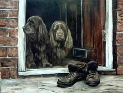 Sussex Spaniel, dog, purebred dog