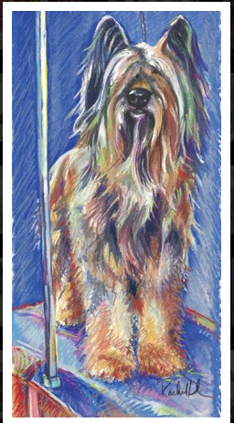 briard, dogs, purebred dogs, grooming