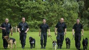 Police dogs, purebred dogs, dogs
