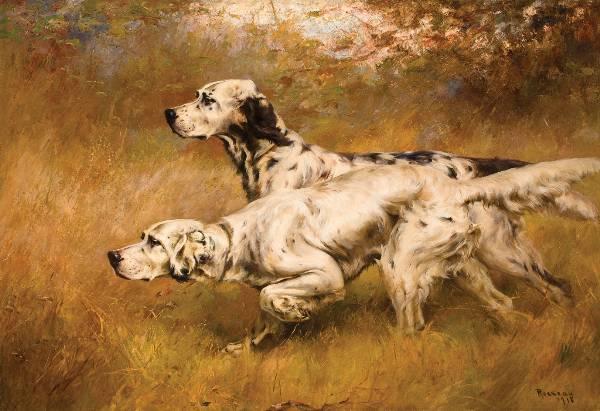 Dogs, history,Purebred Dogs, setter, English Setter, John Caius