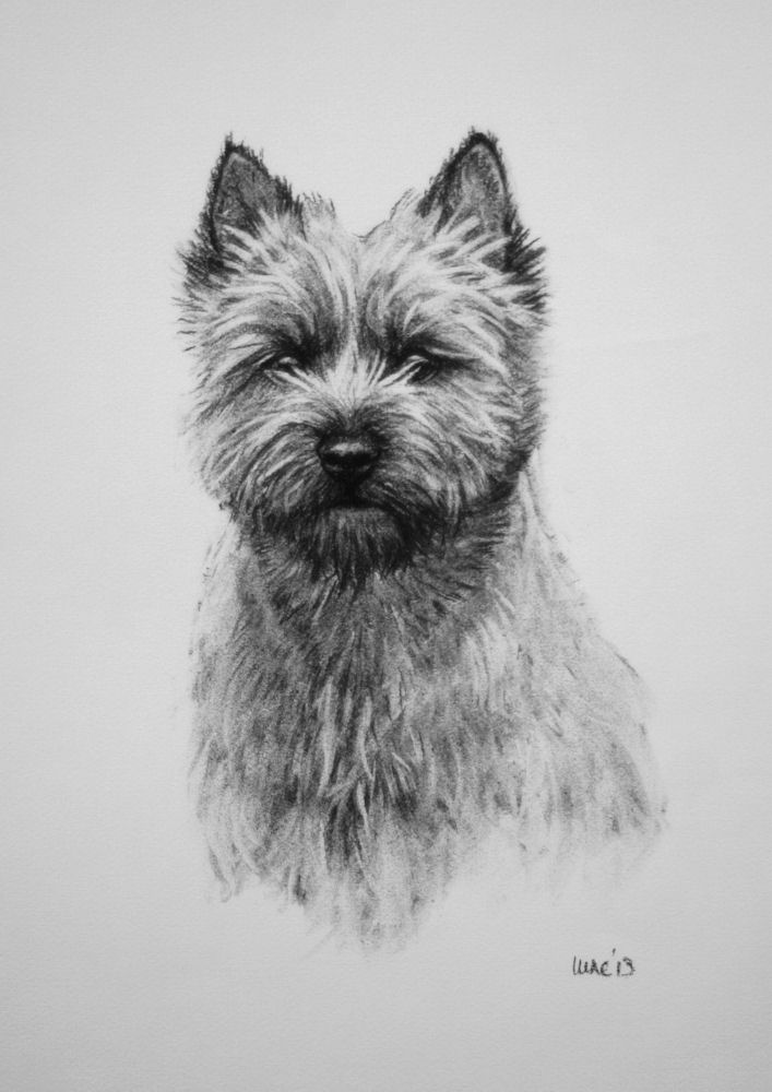 Cairn Terrier, dogs, purebred dogs, wizard of oz