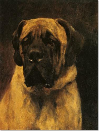 arthur wardle,mastiff, dog museum, purebred dog, dogs
