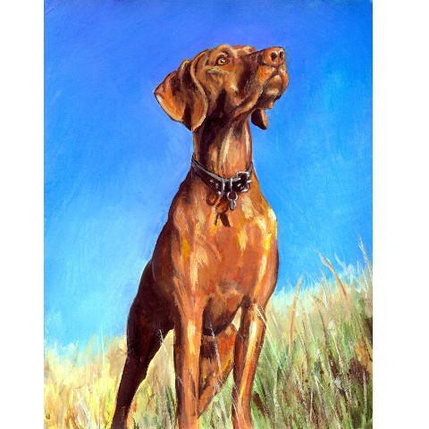 Viszla, dog, Gift of Kings, Hungarian, purebred dog