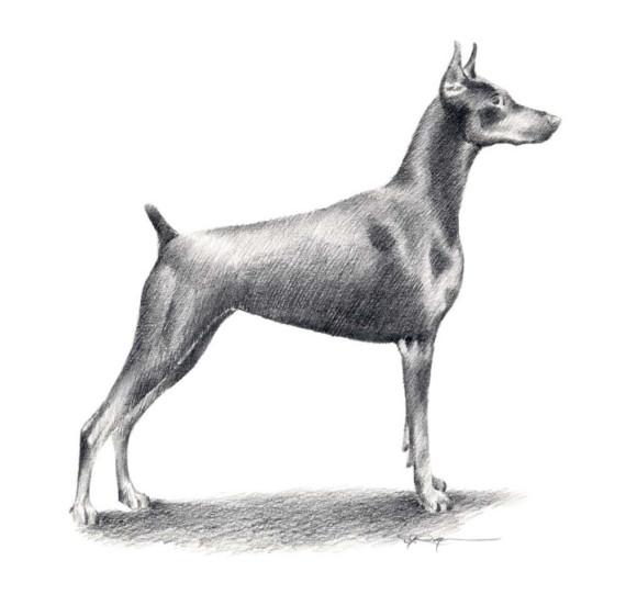 cat feet, dogs, structure, purebred dog, doberman pinscher