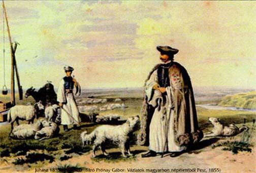 Kuvasz, history, dogs, purebred dogs, Hungary