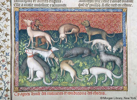 Greyhounds, dogs, purebred dogs, history