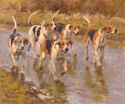 Foxhounds, fox hunt, dogs, purebred dogs