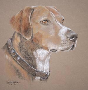 Hamiltonstovare. hamilton hound, dogs, purebred dogs