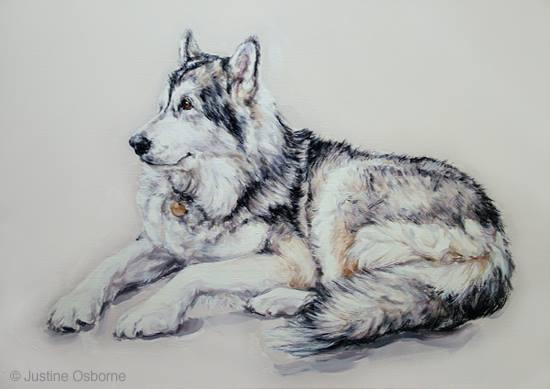 nordic,coat,dogs, purebred dog, arctic, Alaskan Malamute,