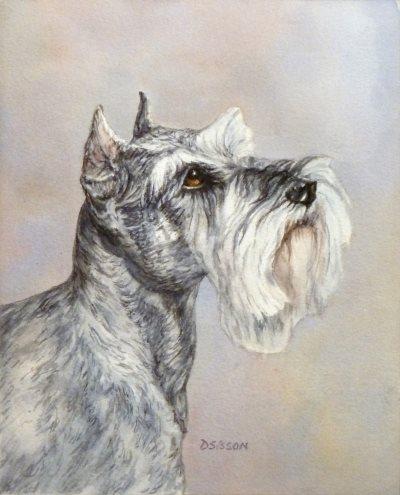 Schnauzer, dog, purebred dog, size