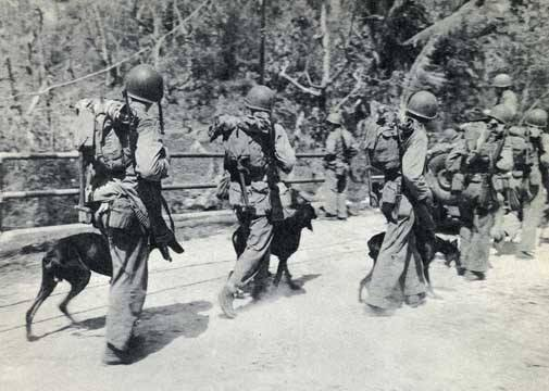 war dogs, memorial, military dogs, doberman pinscher, dog, purebred dog, devil dogs, Guam,