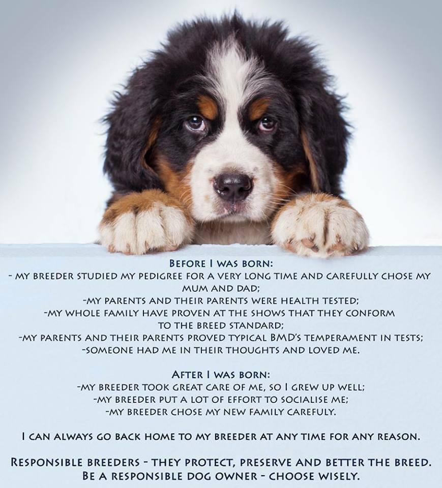 dogs, breeder, purebred dogs