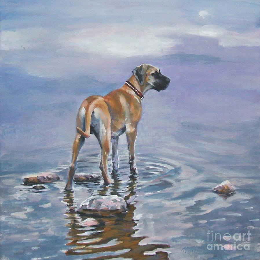 great dane, dogs, purebred dogs