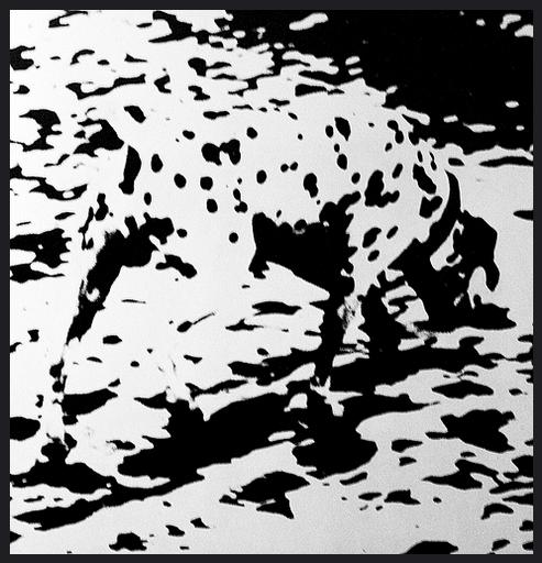 dalmatian, dogs, purebred dogs