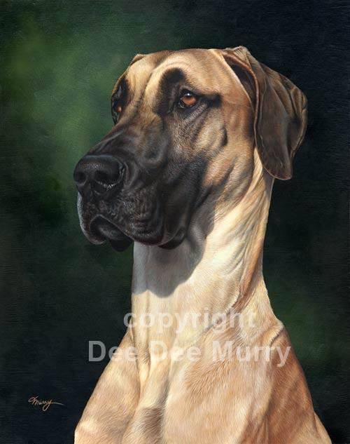great dane, dogs,purebred dogs, german, Deutsche Dogge, German Mastiff