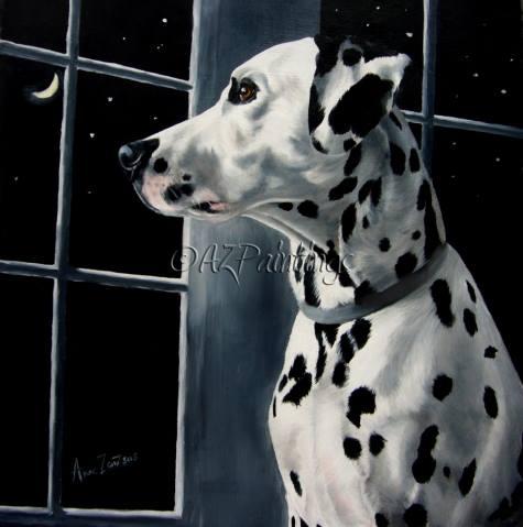 dalmatian, dogs, purebred dogs, coach dog, fireman's dog